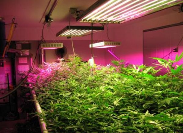 智能生长灯可助室内农业实现更高盈利防水箱